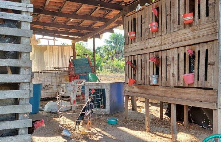 Local que era utilizado como rinha de brigas de galo é desarticulado no norte do Tocantins